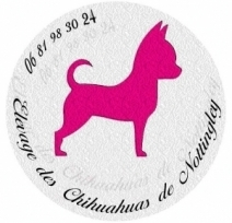 Elevage Chihuahua Paris