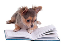 livres chihuahua