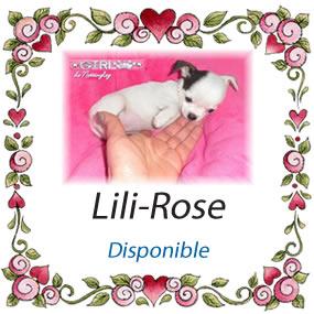 lili-rose