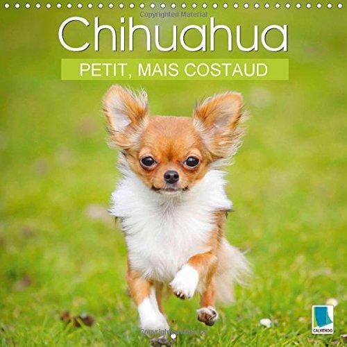 Chihuahua Petit Mais Costaud La Plus Petite Race De Chien Au