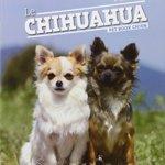 Le-Chihuahua-0