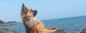 Des vétérinaires spécialisés dans le comportement de nos chiens