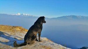 Ce qu'il faut savoir pour voyager avec son chien