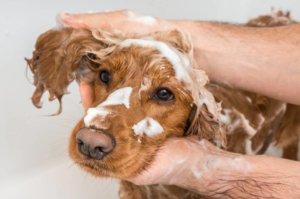 Les meilleures façons de s'occuper de son chien